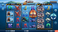 6 Wild Sharks Vorschaubild