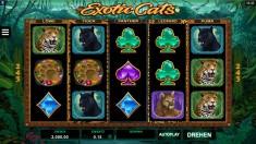 Logo Exotic Cats
