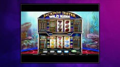 Bild zum Casino Spiel Jackpot Jester Wild Nudge