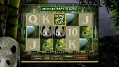 Untamed Giant Panda Vorschaubild
