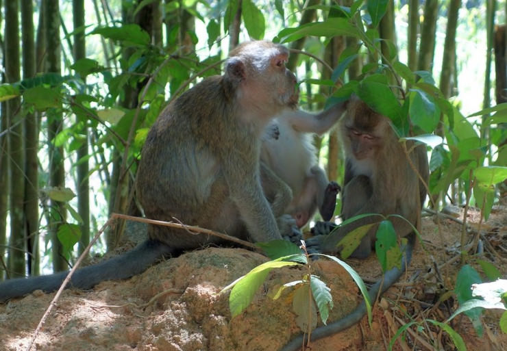 Studie: Affen fühlen sich ähnlich vom Glücksspiel angezogen wie Menschen